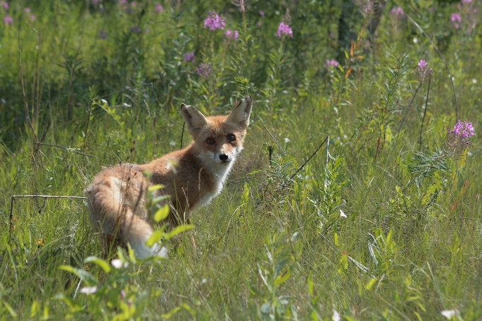 Спасённые южноуральские дикие животные вернулись в природу, фото-2