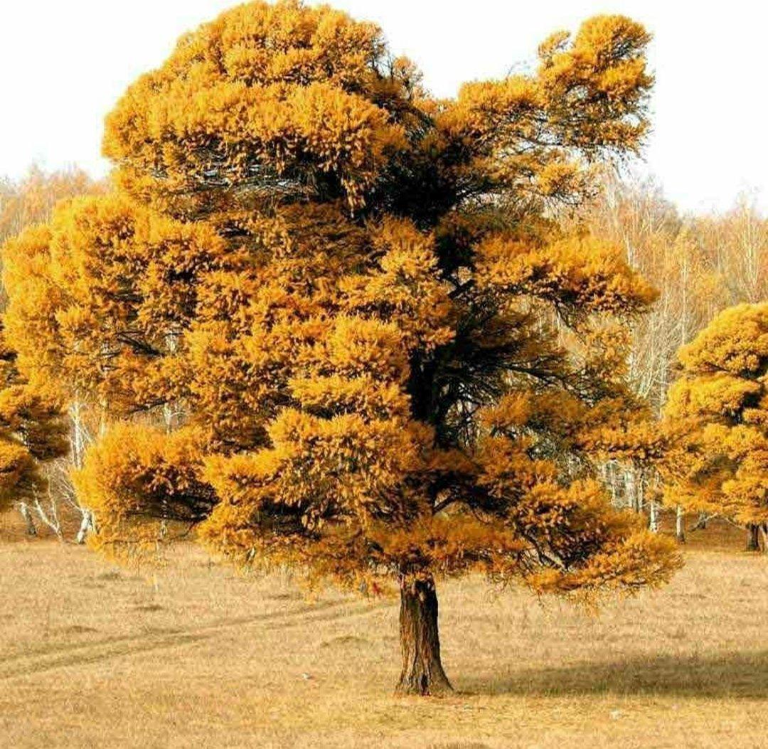 Общественники об уничтожении Кужановских лиственниц: «это варварское явление», фото-2