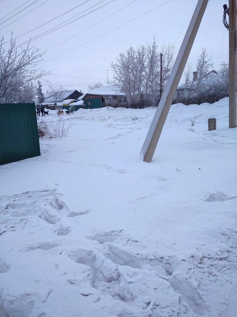 В Магнитогорске на школьницу набросилась собака, фото-1